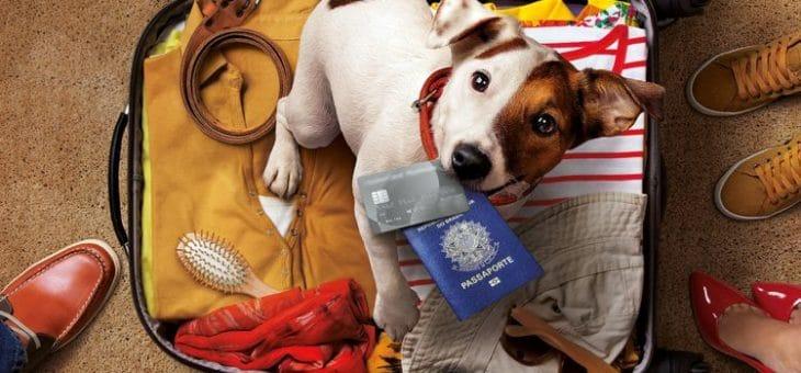 Cancelamento de voo com pet: seja indenizado pelo desrespeito a você e ao seu animalzinho