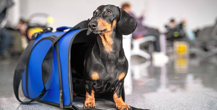 Cancelamento de voo com pet: como ser indenizado?