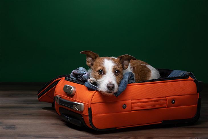 Se você passou por atraso ou cancelamento de voo com pet e foi lesado, reivindique a sua indenização